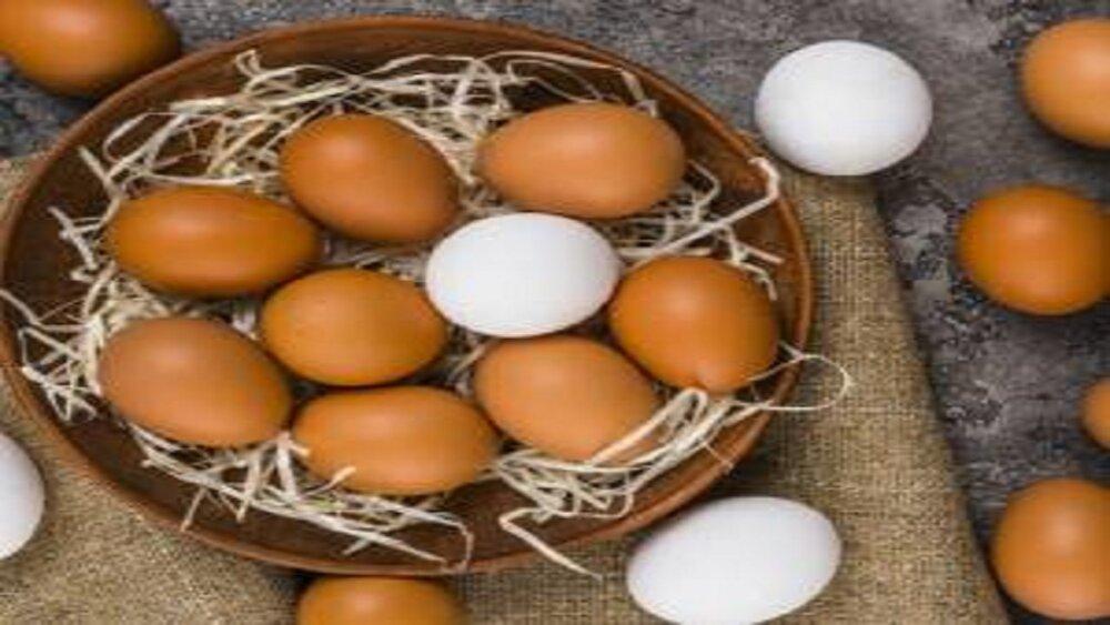 جلوگیری از آلودگی تخم مرغ