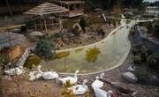 مشاهده آنفلوانزای فوقحاد در باغ پرندگان قم