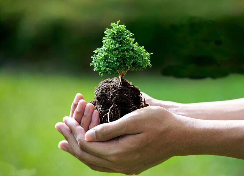تأکید قرآن بر درختکاری چه دلیلی دارد؟