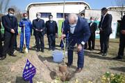 برگزاری آیین گرامیداشت هفته درختکاری در آکادمی ملی المپیک