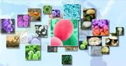 ذخایر ژنتیکی و زیستی؛ منبعی برای حفاظت و بهرهبرداری پایدار از طبیعت
