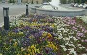 کاشت ۸۰۰ هزار گل و گیاه در بوستانهای ورامین