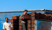 صادرات گوجهفرنگی به عراق فراهم شد