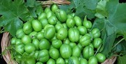 قیمت میوههای نوبرانه