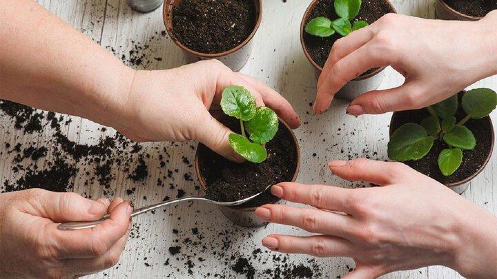 قیمت انواع خاک و کود گلدان