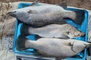 قیمت انواع ماهی
