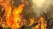 علت اصلی آتش سوزی های البرز + جزئیات