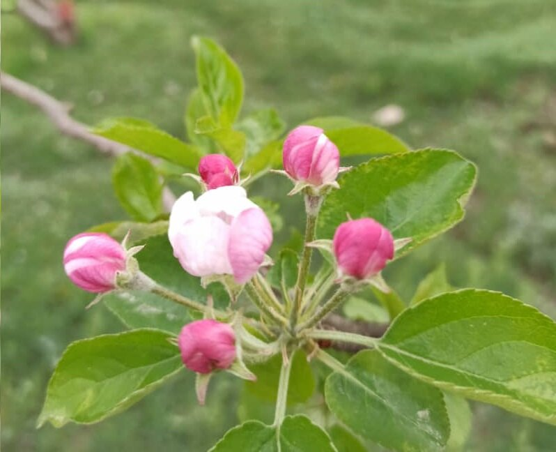 طبیعت زیبای بهاری فیروزکوه