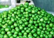 قیمت میوه های فصل