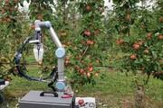 تولید رباتی میوه چین