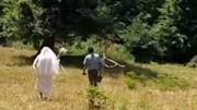 دوچرخه به عنوان خودروی عروسی زوج جوان / فیلم