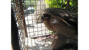 شکارچی پرنده های کمیاب دستگیر شد