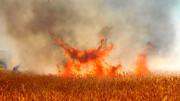 آتش سوزی وسیع در مزارع مهران / مهار شد