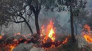 آتش سوزی های سریالی جنگل های کرخه تمامی ندارد / جزئیات