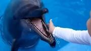 دلفین گرسنه دست کودک را گاز گرفت + فیلم