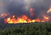آتشسوزی در ۱۲۷۹ هکتار از مناطق چهارگانه محیط زیست
