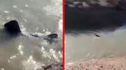 یک کوسه بزرگ در رودخانه کرخه مردم را به وحشت انداخت + عکس و فیلم