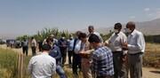 اجرای طرح PVS در مزارع کشاورزی دماوند