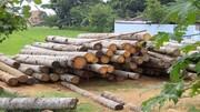 کشف ۷ تن چوب قاچاق در ورامین