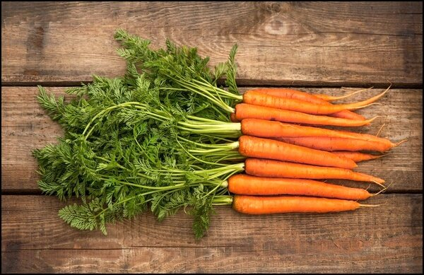 از برگ هویج برای سلامتی غافل نشوید !