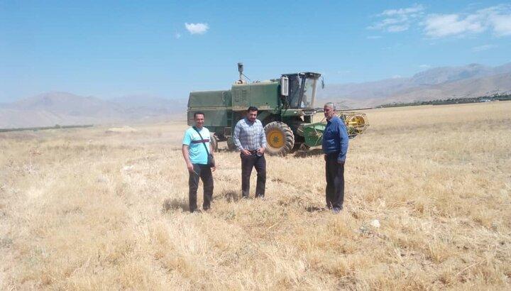 برداشت 558 تن گندم از سطح 200 هکتار از مزارع دماوند