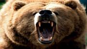 خرس وحشی جوان ۳۵ ساله را درید !