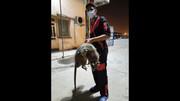 موش عجیب الخلقه سگ ها را هم می خورد !+ عکس
