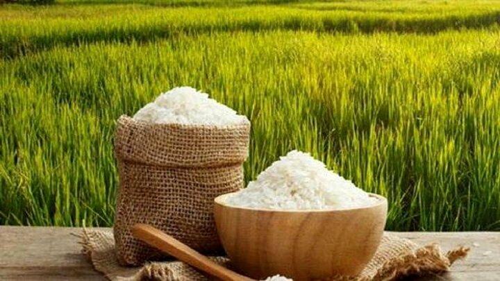 عوامل مؤثر بر قد کشیدن قیمت برنج