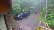 شوکه شدن زنی از حضور خرس در ماشینش + فیلم
