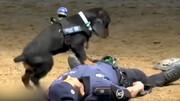 نجات مرد با ماساژ قلبی توسط سگ مهربان + فیلم