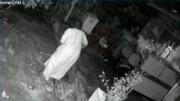 پلنگ وحشی پیرزن را غافلگیر کرد + فیلم