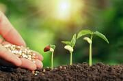 خاک ارگانیک از کاه و کلش تولید شد
