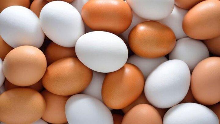 قیمت انواع تخم مرغ در بازار+ جدول