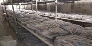 ۴۶ هزار نخ سیگار قاچاق در ملارد کشف شد/ جمعآوری ۶۰ معتاد کارتنخواب و متجاهر