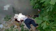 سقوط مرگبار ۴ همدانی از درخت گردو