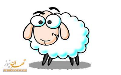 خلاف کردن جلو چشم گوسفند + عکس