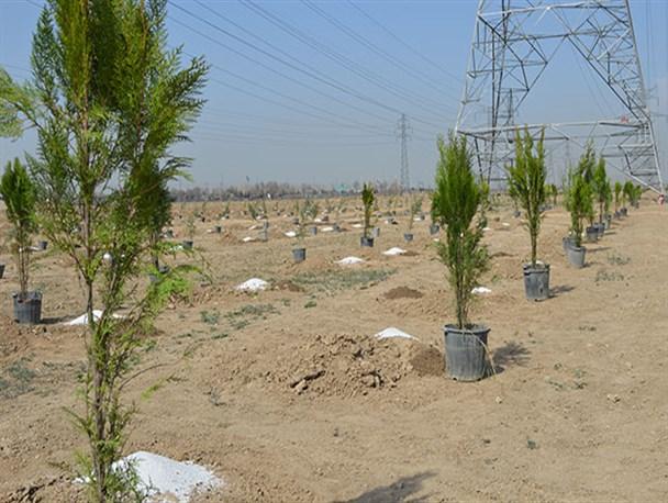 ۴۰۰ اصله درخت در باقرشهر کاشته شد+تصاویر