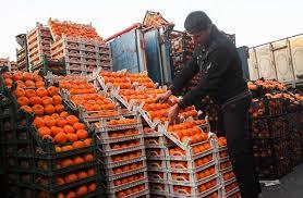 نگران میوه شب عید نباشید/ توزیع میوه تا چند روز دیگر