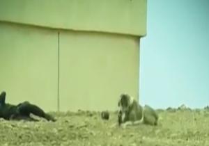 جنازه داعشی که خوراک سگهای ولگرد شد + فیلم