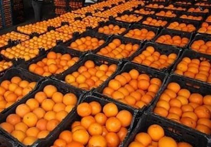 مردم امسال عید کمتر پرتقال بخورند