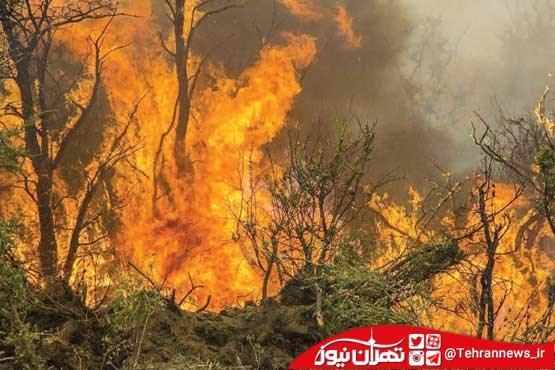 آتش گرفتن جنگل آمل