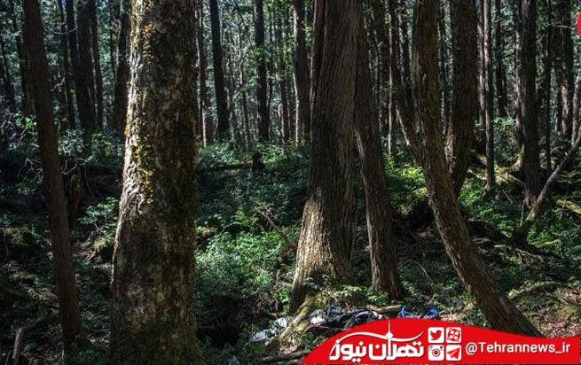 تصاویر ترسناک از جنگل خودکشی در ژاپن