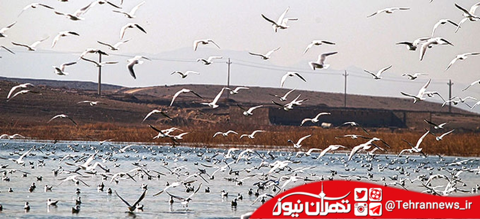 تالاب عشق آباد شهرری از مراکز عالی برای پرنده نگری