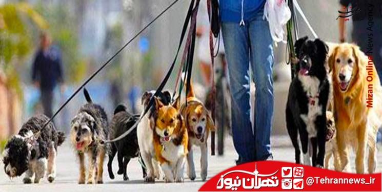 سگ گردانی در پارکهای لواسان ممنوع شد + جزئیات