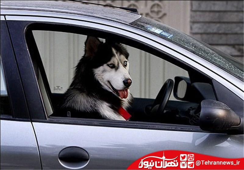 سگ گردانی در تهران ممنوع شد