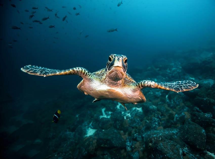 ضایعات پلاستیکی؛ فاجعهای عظیم در اقیانوسها
