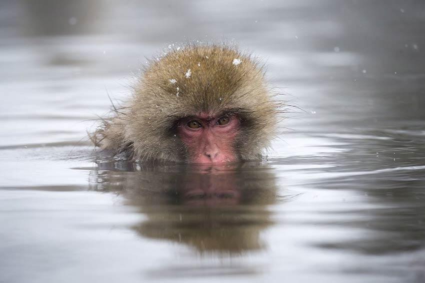 میمونهایی که تلویزیون تماشا میکنند