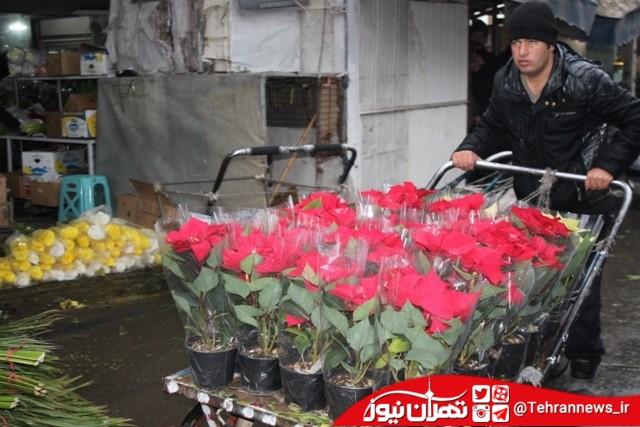 حال و هوای بازار گل و گیاه امام رضا (ع)
