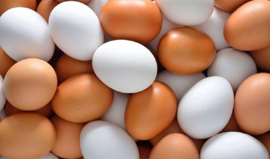 سازمان حمایت مخالف افزایش قیمت تخم مرغ