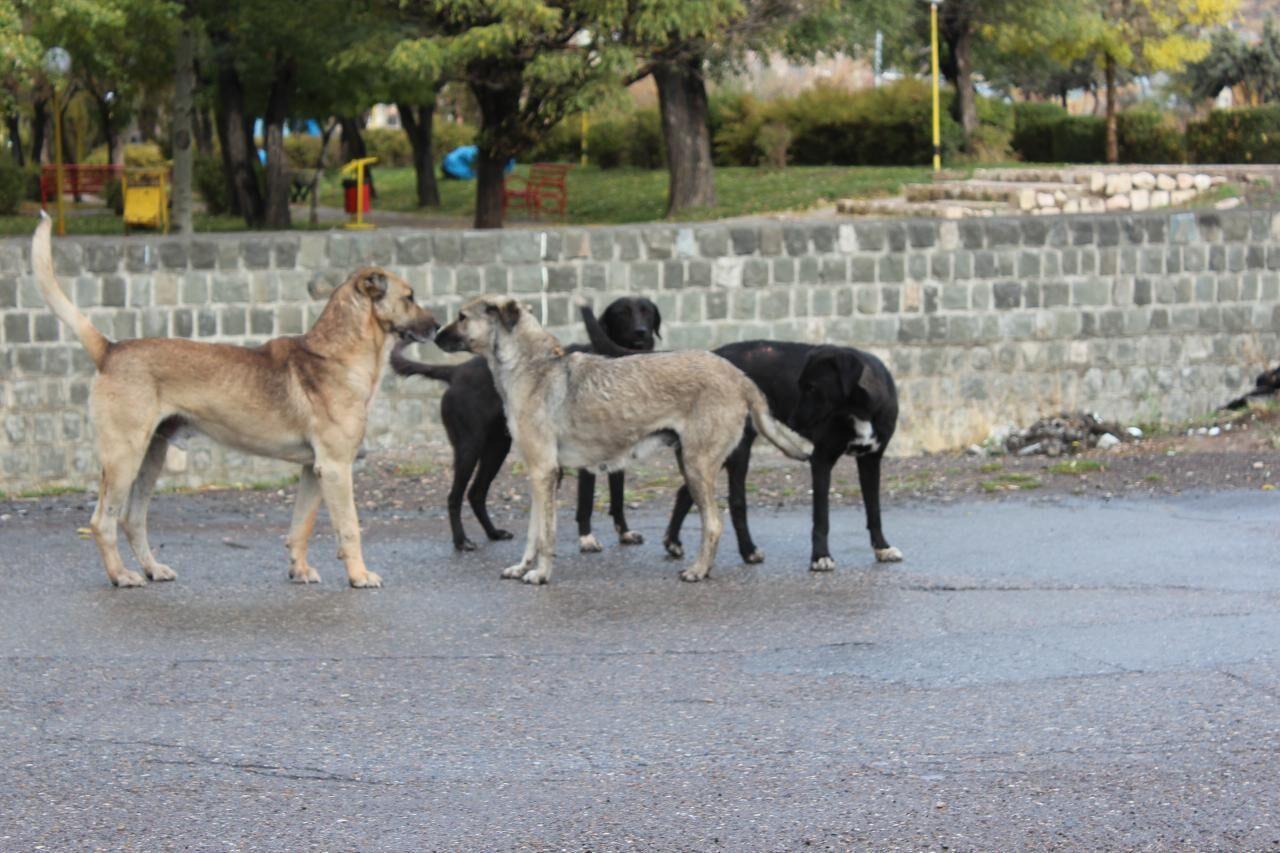 سگهای وحشی جان نوازنده تومبا را گرفتند